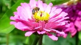 Fiori ed insetti stock footage