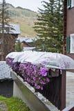 Fiori ed ombrelli Fotografie Stock