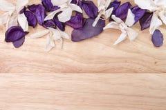 Fiori ed orchidee dei petali sui precedenti di Immagini Stock