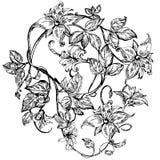 Fiori eleganti d'annata Illustrazione in bianco e nero di vettore Honeysuckle Flower botanica Immagine Stock Libera da Diritti