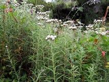 Fiori esotici alla valle dei fiori Fotografia Stock