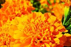 Fiori in estate Fotografie Stock