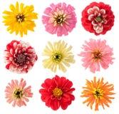 Fiori favoriti del giardino impostati Fotografie Stock Libere da Diritti