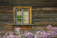 Fiori in finestra Fotografie Stock Libere da Diritti