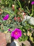 Fiori in fioritura Immagini Stock