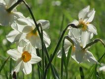 Fiori in fioritura Immagine Stock Libera da Diritti