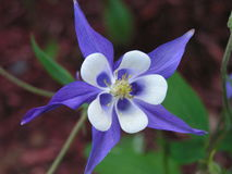 Fiori in fioritura immagine stock