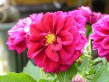Fiori in fioritura immagini stock libere da diritti