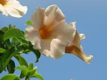 Fiori, fioritura, natura Immagini Stock