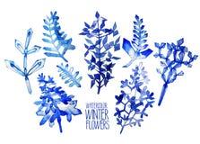 Fiori fntasy di inverno dell'acquerello Fotografie Stock Libere da Diritti