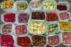 Fiori Fondo variopinto delle rose (rosas) Fotografie Stock