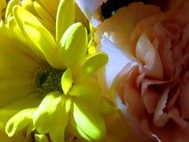 Fiori freschi del biglietto di S. Valentino immagini stock libere da diritti