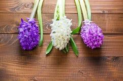 Fiori freschi del giacinto su fondo di legno Fotografia Stock