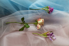 Fiori freschi sul rosa blu del tessuto Fotografia Stock