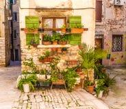 Fiori in Front Of Old Building-Rovinj, Croazia Fotografie Stock Libere da Diritti