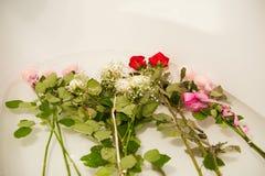 Fiori gettati nel bagno, fiori indesiderati immagine stock libera da diritti