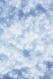 Fiori ghiacciati della neve Fotografia Stock