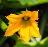 Fiori gialli fotografia stock libera da diritti