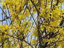 Fiori gialli Immagine Stock
