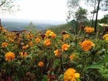 Fiori gialli che hanno incanto nel selvaggio immagine stock