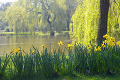 Fiori gialli con il fondo del lago fotografia stock