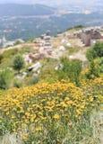 Fiori gialli con la montagna Immagini Stock
