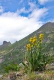 Fiori gialli contro lo sfondo delle montagne Fotografia Stock Libera da Diritti