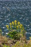 Fiori gialli contro lo sfondo di acqua Immagine Stock Libera da Diritti