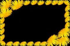 Fiori gialli del dente di leone della pagina Fotografie Stock Libere da Diritti