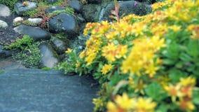 Fiori gialli del giardino nella priorità alta Nei precedenti, un fiume sulle rocce Il movimento della macchina fotografica lo per stock footage