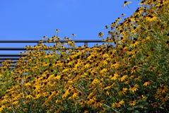 Fiori gialli del pendio di collina Immagini Stock Libere da Diritti