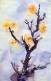 Fiori gialli dell'albicocca dell'acquerello Fotografia Stock Libera da Diritti