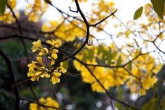 Fiori gialli di estate fotografia stock