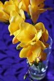Fiori gialli di freesia Fotografia Stock