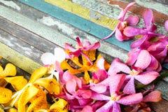 Fiori gialli e rosa su legno variopinto Fotografia Stock