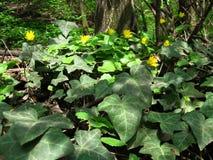 Fiori gialli, fiore dorato, tappeto del lix del ½ del ¿ del hï del Ra del ½ del ¿ di Hedï dei fiori Immagini Stock Libere da Diritti
