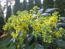 Fiori gialli nel giardino fotografie stock