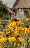Fiori gialli nel giorno soleggiato di estate contro la casa rurale Immagini Stock Libere da Diritti