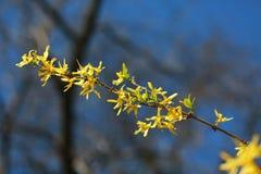 Fiori gialli nel legno Fotografia Stock Libera da Diritti