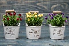 Fiori gialli, porpora e rossi artificiali in un vaso da fiori Fotografia Stock