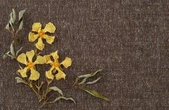 Fiori gialli secchi sul tessuto del tweed con lo spazio del fondo o sulla stanza per le vostre parole Fotografie Stock Libere da Diritti