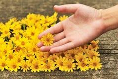 Fiori gialli selezionati Immagini Stock Libere da Diritti