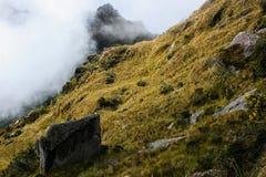 Fiori gialli soli nelle montagne selvagge Immagine Stock