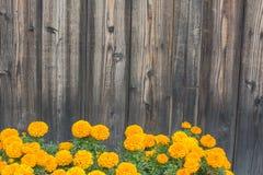 Fiori gialli su fondo di legno Fotografia Stock Libera da Diritti