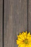 Fiori gialli su fondo di legno fotografia stock