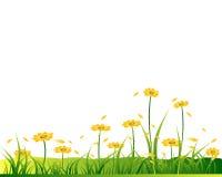 Fiori gialli su glassland Fotografie Stock