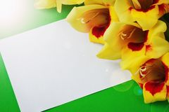 Fiori gialli su una carta Fotografia Stock Libera da Diritti