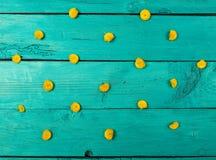 Fiori gialli su una priorità bassa blu Immagini Stock
