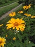 Fiori gialli sui precedenti di una strada del villaggio immagini stock