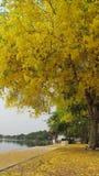 Fiori gialli sull'estate Immagini Stock